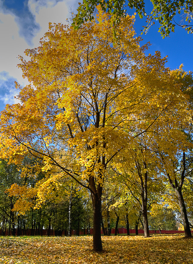 Осенние пейзажи фото золотой осени в картинках