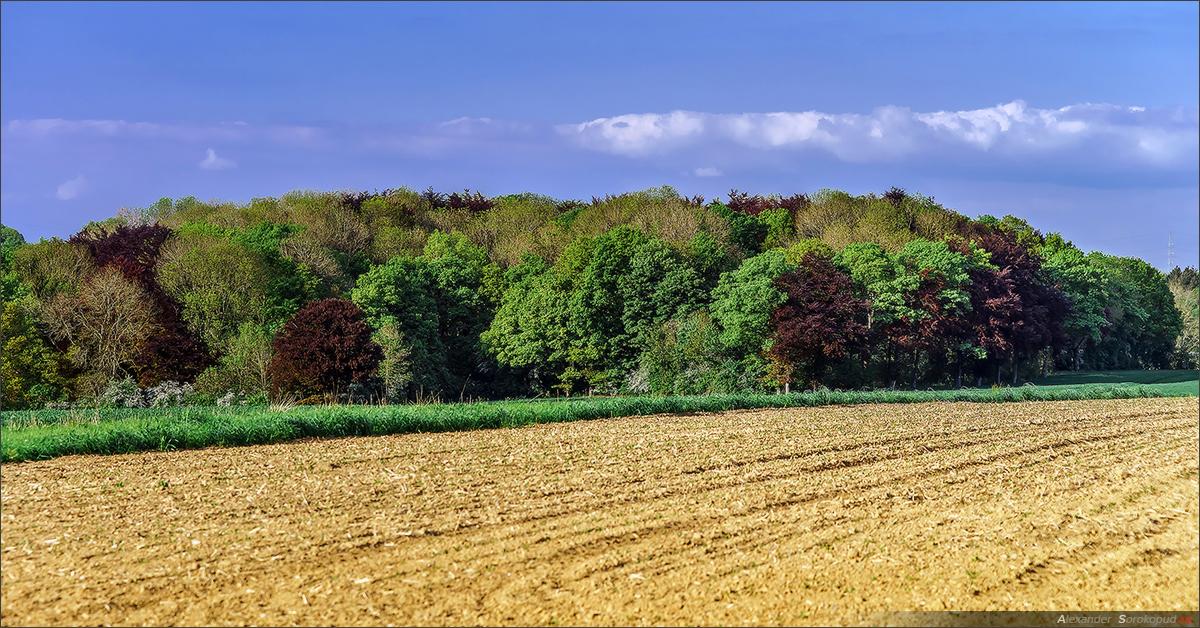 Фото вспаханное поле