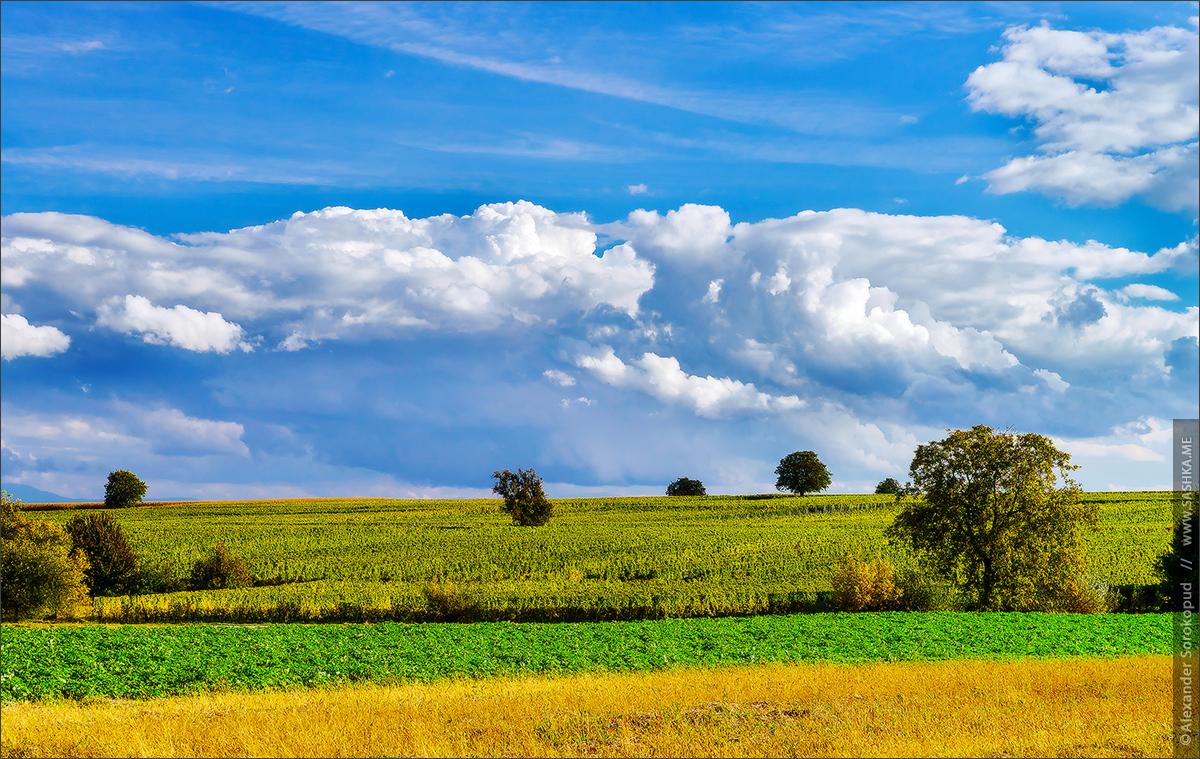 Осеннее солнышко в полях